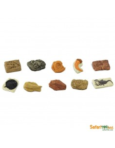 Lots de différents fossiles figurine educative montessori education