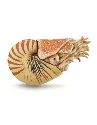 Figurine Nautile nautilus pompilius Collecta 88907 Collecta {PRODUCT_REFERENCE}  Matériel Montessori - 1