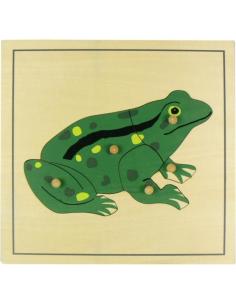 Puzzle grenouille zoologie botanique Matériel Montessori didactique