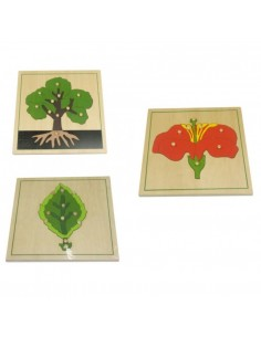 Lot puzzles botanique feuille arbre fleur Matériel Montessori didactique