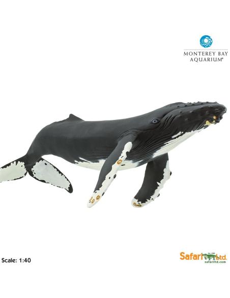 Figurine baleine à bossegéante 35cm Safari 210002 Matériel pédagogique Enrichissement Montessori Jouet Cartes maternelle scien