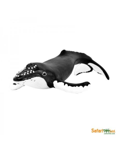 Figurine Baleine à bosse Safari 202029 Matériel pédagogique Enrichissement Montessori Jouet Cartes maternelle science vocabulair