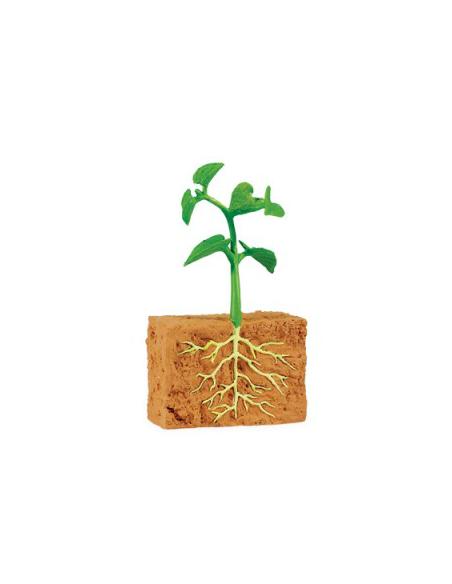 Cycle vie haricot figurine educative montessori education enrichissement regarder grandire details graine germination semis