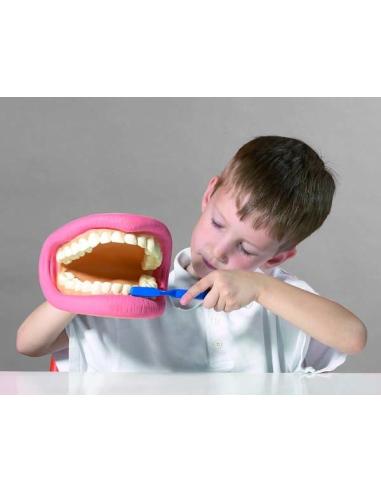 Maquette marionnette dent dentaire pour enfant école maternelle atelier sensibilisation pedodontie