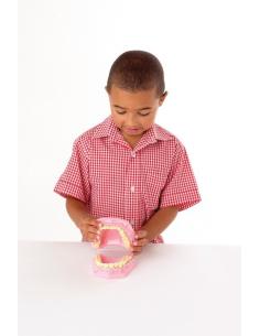 Modèle dent dentier pour élève école primaire maternelle maquette