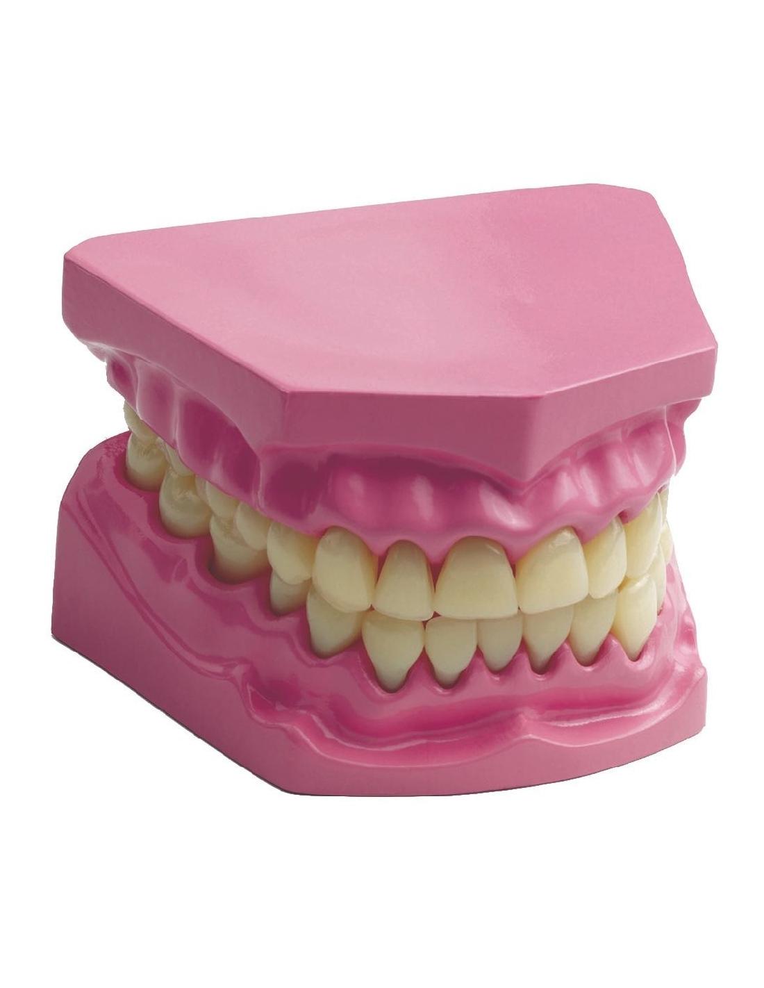 Mod 232 Le Dent Dentier Pour 233 L 232 Ve 233 Cole Primaire Maternelle