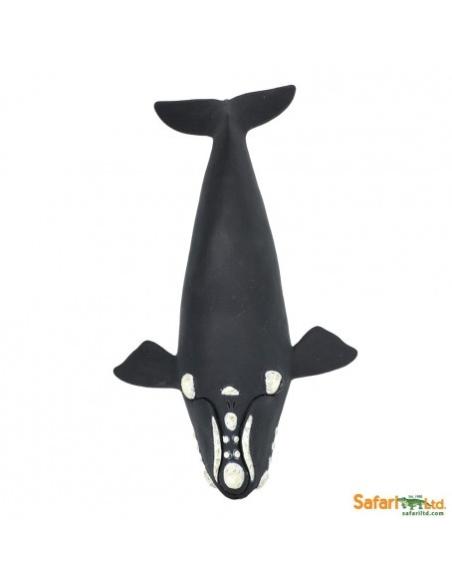 Figurine Baleine franche Safari 204229 Matériel pédagogique Enrichissement Montessori Jouet Cartes maternelle science vocabulair