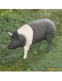 Porc Hampshire