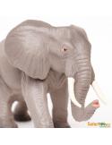 Éléphant d'Afrique2