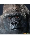 GorilleXL