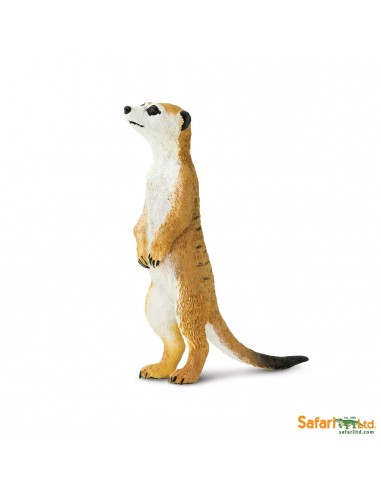 suricate animaux des continents figurine safari ltd enrichissement montessori geographie science carte