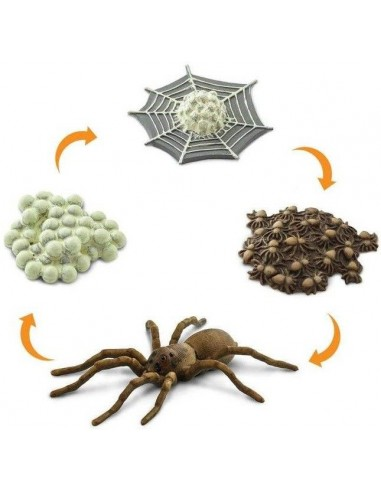 Figurines Cycle de vie de l'araignée - Safari Ltd® 100406 Safari Ltd® {PRODUCT_REFERENCE}  Cycle de vie - 2