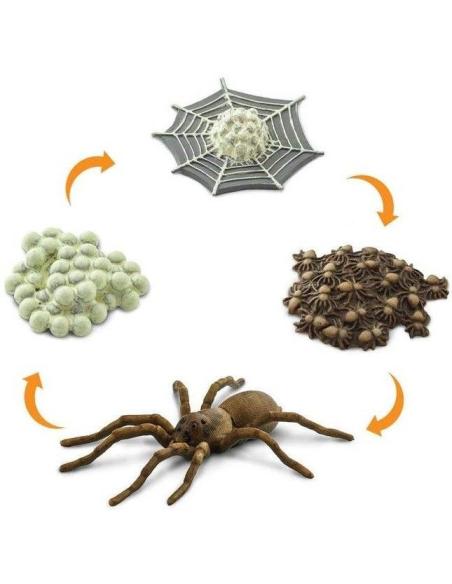 Cycle vie araignée figurine educative montessori education enrichissement biologie svt ecole primaire materiel scolaire svt