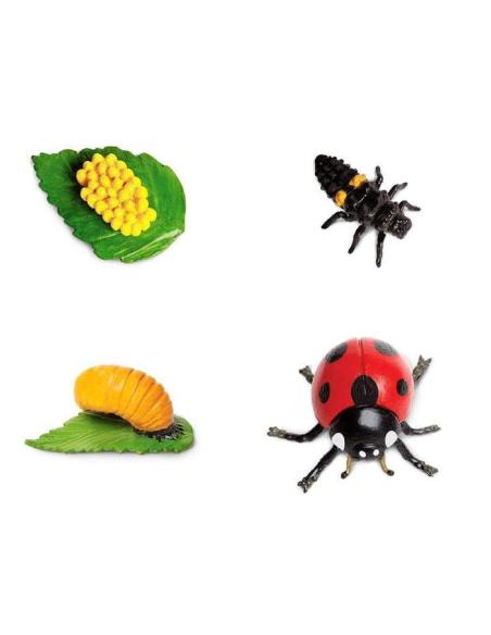 Figurines cycle vie la coccinelle Safari 662716 Matériel pédagogique Enrichissement Montessori Jouet Cartes maternelle science v