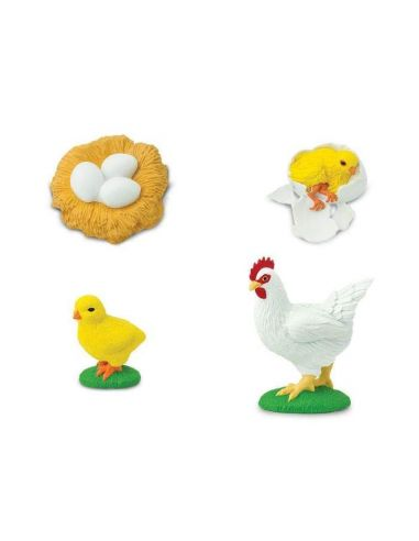 Cycle poule vie poulet figurine educative montessori pedagogique safari