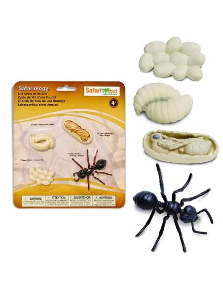 Figurines cycle vie la fourmi Safari 663916 Matériel pédagogique Enrichissement Montessori Jouet Cartes maternelle science vocab