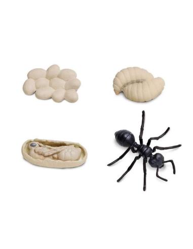 Cycle vie fourmi figurine safari educative montessori pedagogique enrichissement