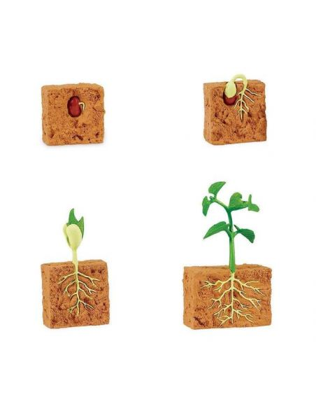 Cycle vie plante haricot figurine educative montessori education pedagogique