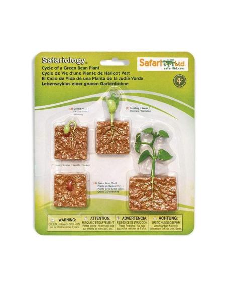 Cycle vie plante haricot figurine educative montessori education enrichissement