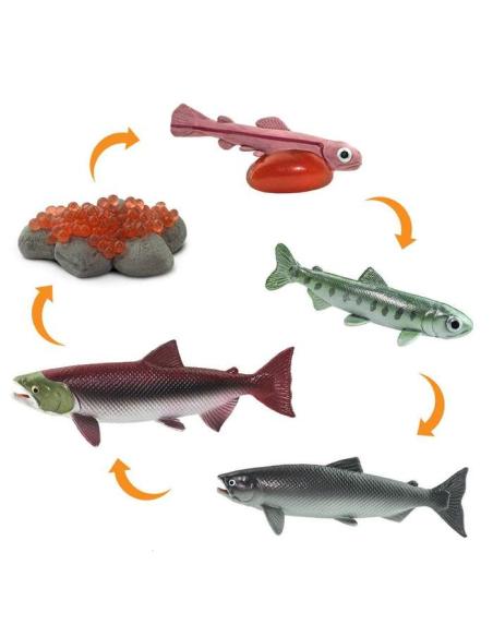 Cycle vie saumon figurine educative montessori education enrichissement biologie ecole primaire materiel scolaire pedagogique