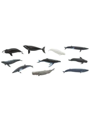 Montessori tube lot figurines Baleine bleue franche bosse boréale grise pilote Petit rorqual Bryde Cachalot Béluga