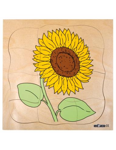 Puzzle étages cycle fleur tournesol Germination graine materiel pedagogique science primaire ecole enseignant