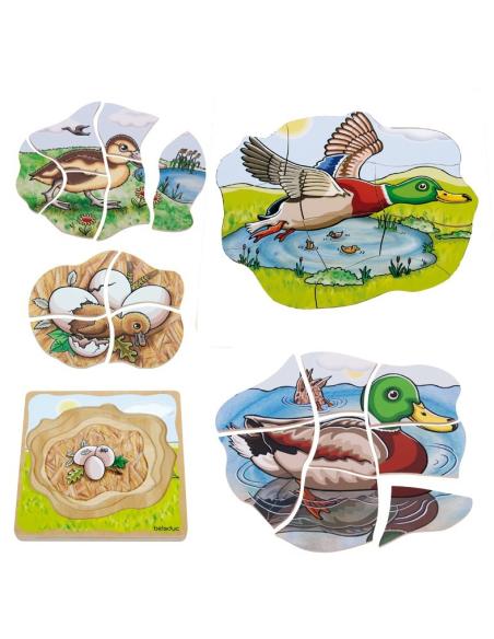 Puzzle étages cycle vie canard Beleduc materiel science biologie animal reproduction educatif ecole maternelle maison