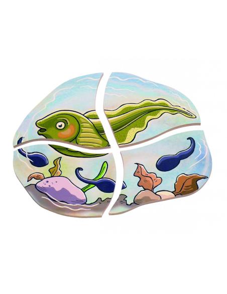 Puzzle étages cycle vie grenouille Beleduc materiel sequence science ecole maternelle primaire catalogue profressionel tetard
