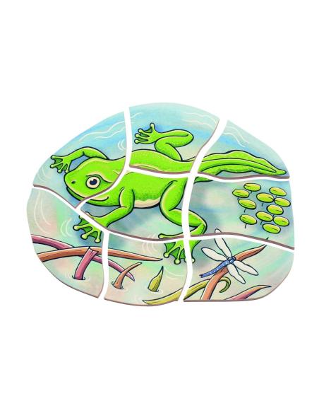 Puzzle étages cycle vie grenouille Beleduc materiel sequence science ecole maternelle primaire catalogue profressionel montessor